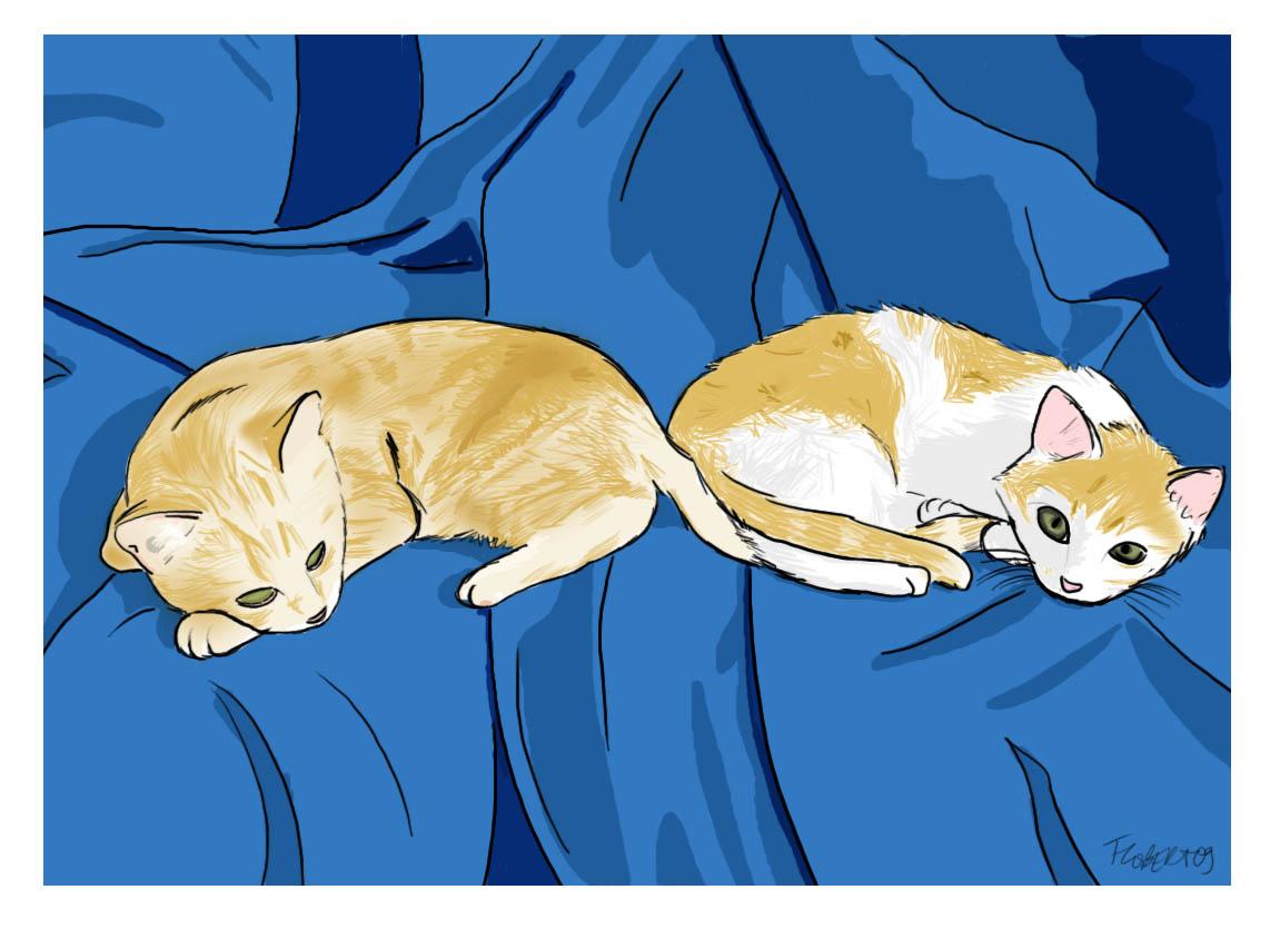catsbordsblancs.jpg