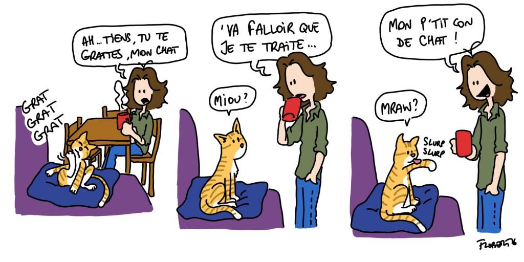 traiter le chat